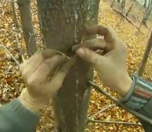 Primitivní provaz z kořene smrku