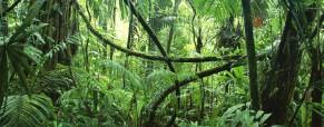 Cestování džunglí