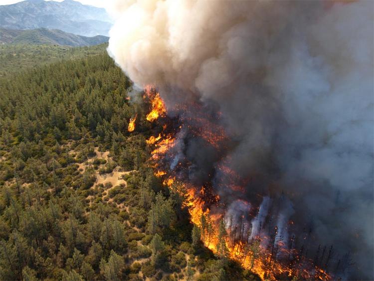 Výsledek obrázku propožár lesa