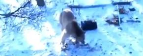 Medvěd napadl skupinu turistů!