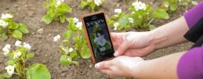 Aplikace určí rostlinu na počkání