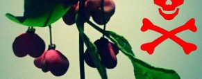 Potrava znašich luhů a hájů – Úvod