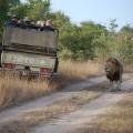 safari-935927_640