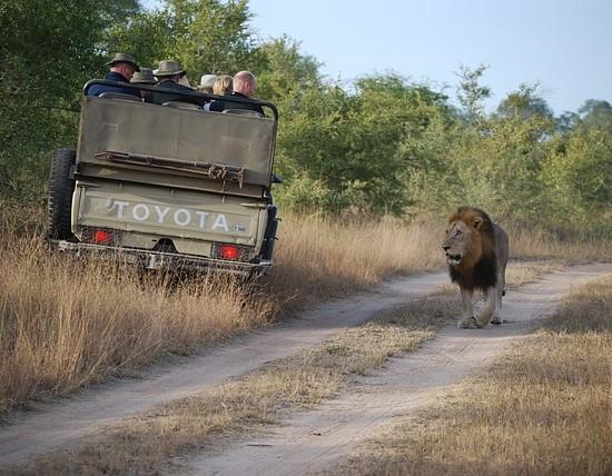 Zaviní ochránci zvířat smrt 200 lvů? Možná ano!