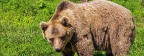 S pepřovým sprejem na medvěda?
