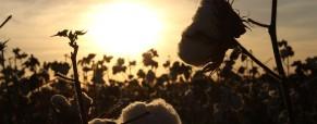 Bavlna jako multifunkční nástroj
